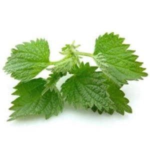 Nettle to stop hair fall